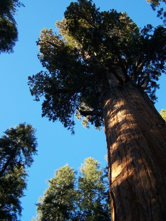 the-big-trees-1374208.jpg