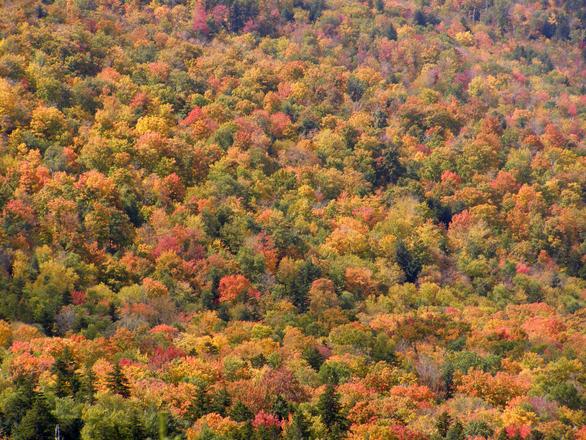 Fall White Mountains