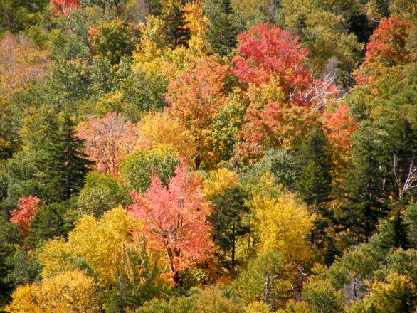 fall-white-mountains-2-1160307.jpg
