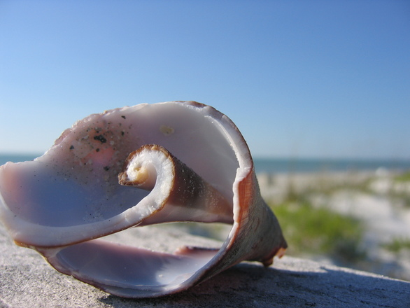 Broken Shell St Petersburg Beach
