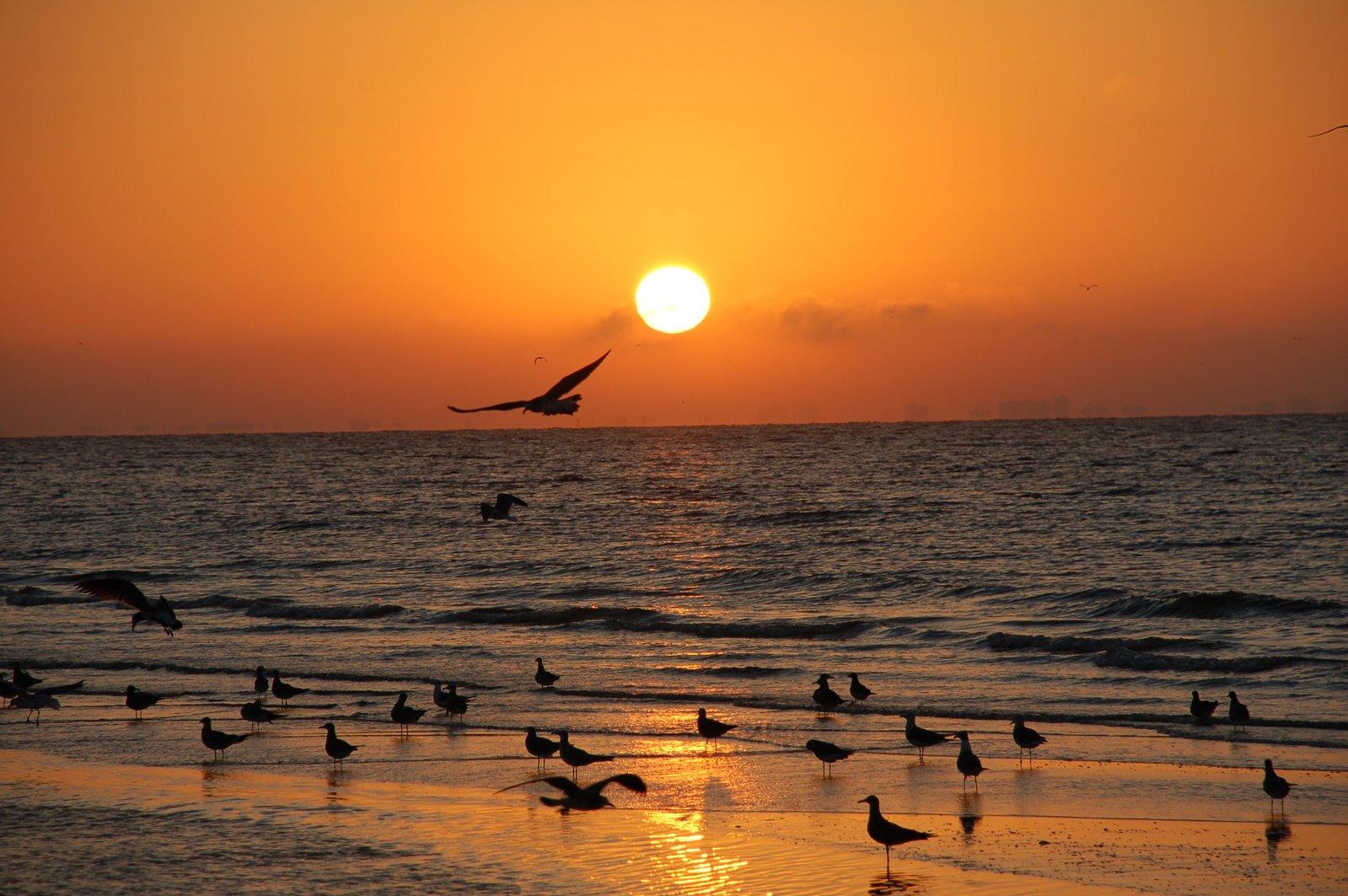 Sunrise Sanibel Island