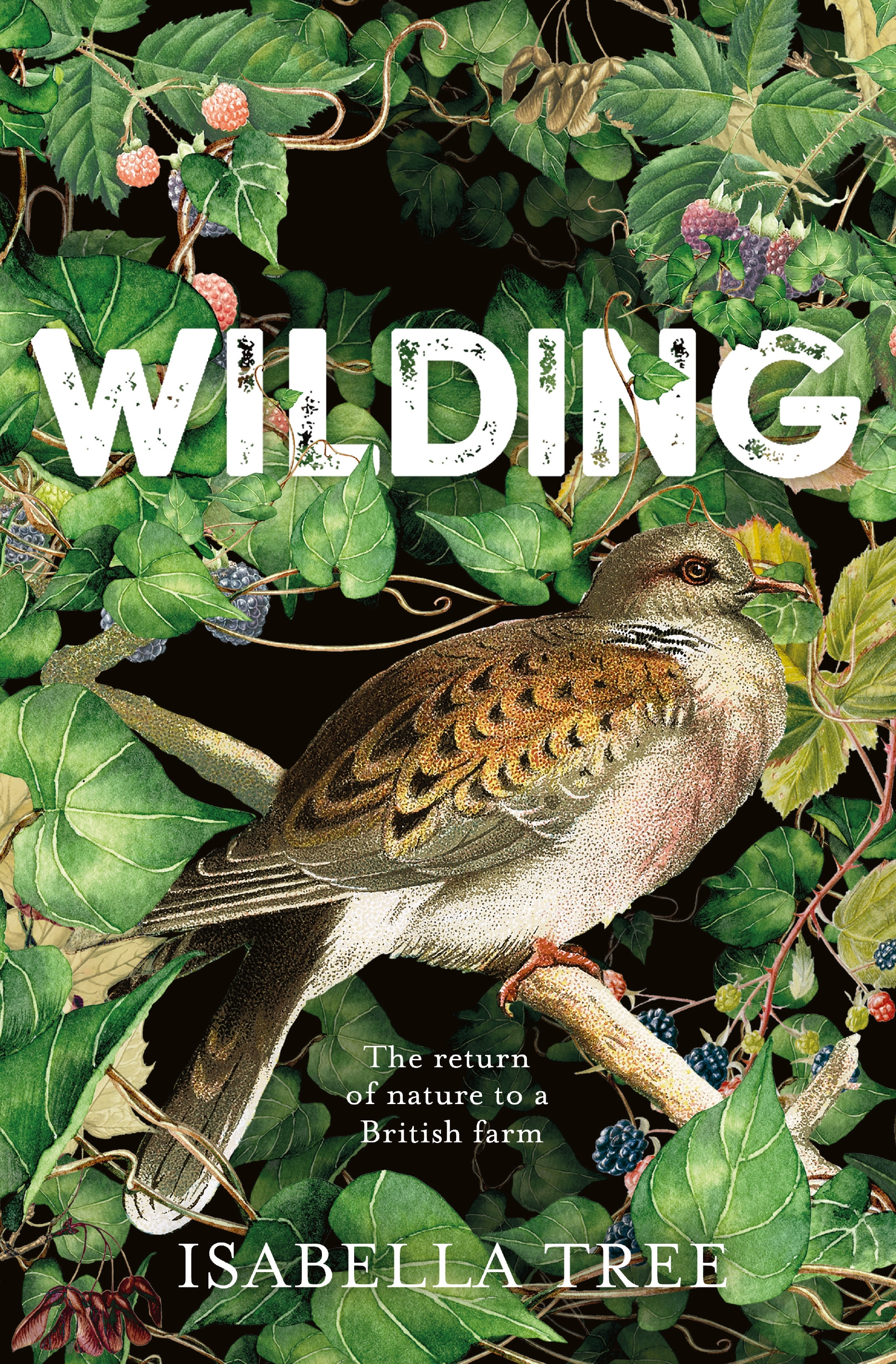 WILDING front panel_high res cover.jpg