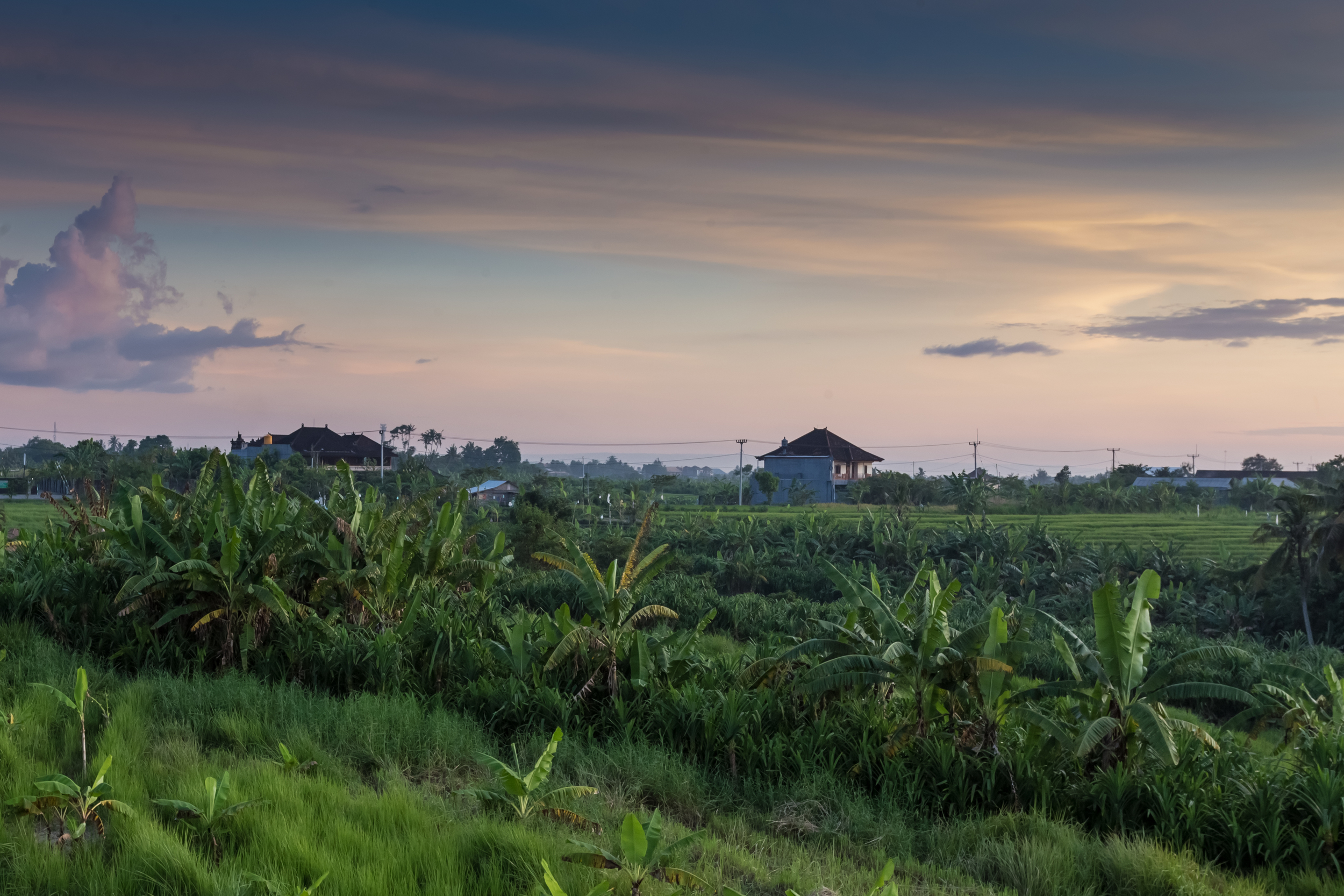 Omahkoe from a distance, surrounded by the paddy fields!