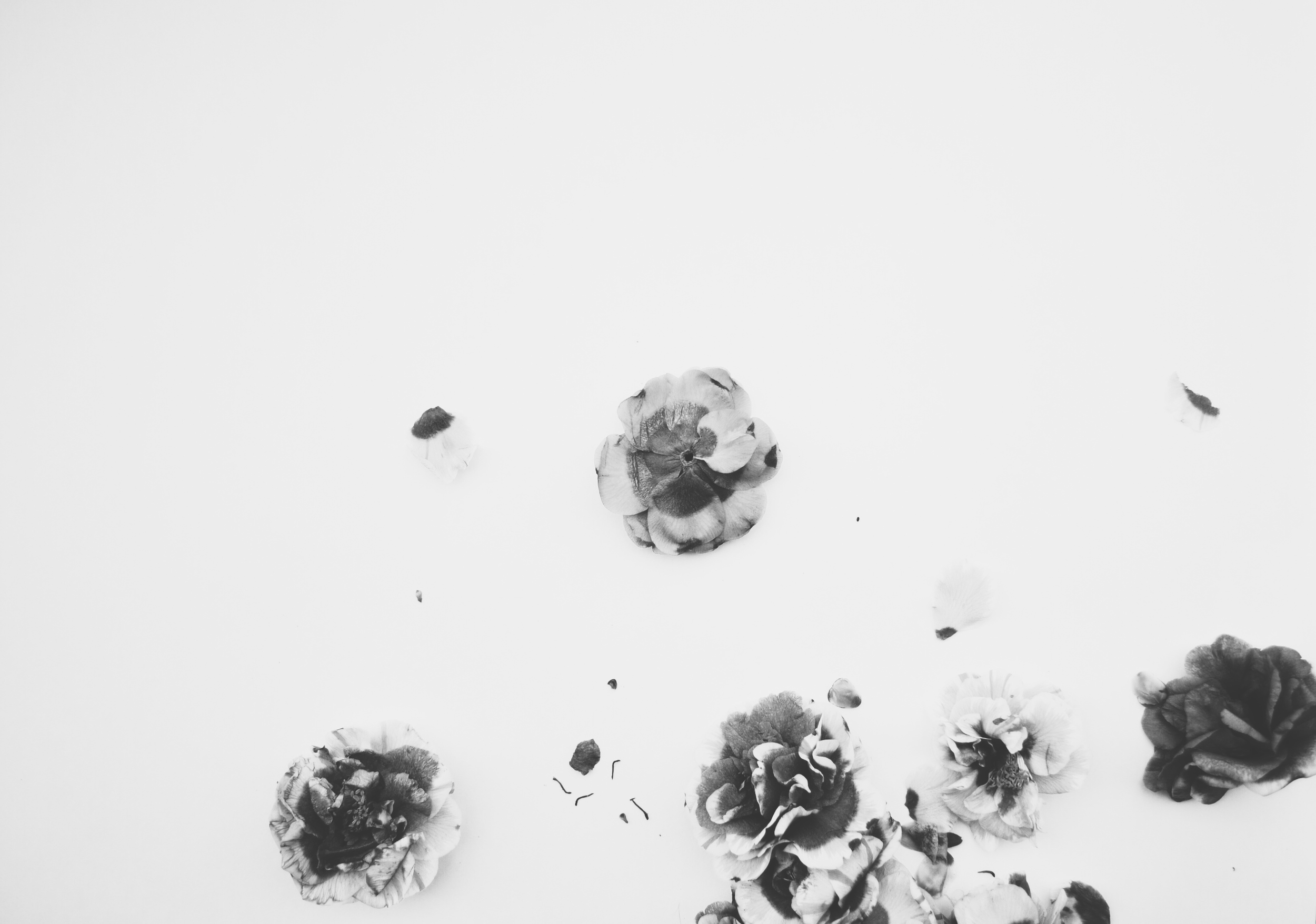 lisa qualls,  camellia debris (study for a drawing) , 2015. Photograph on watercolor paper, 21 x 30 inches.