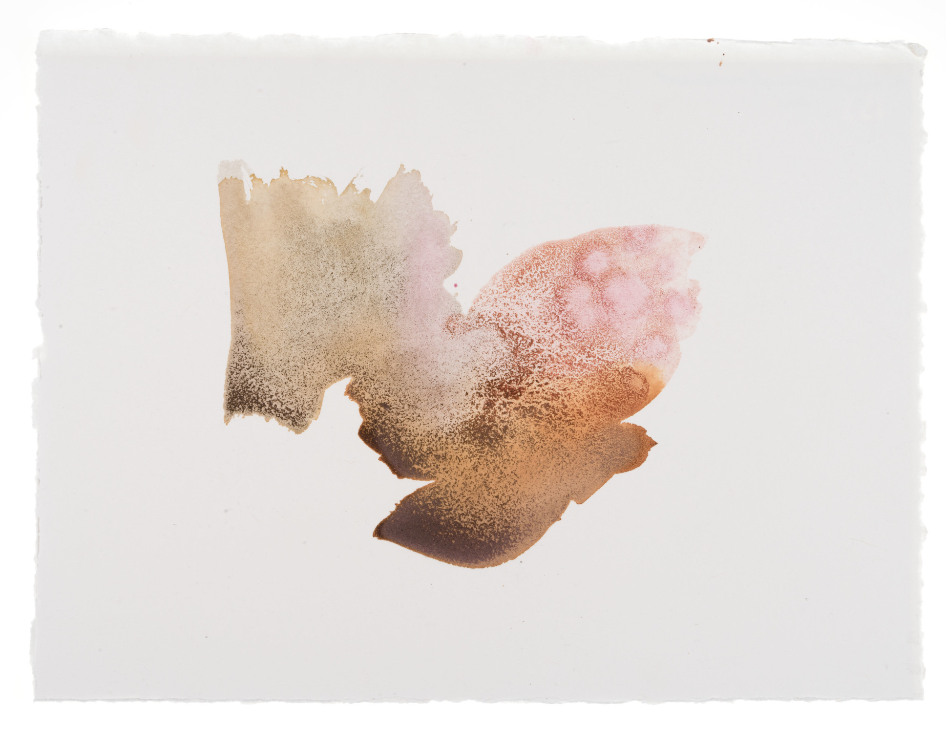cornelia white swann,  a thorny gesture , 2016. marigold, cochineal, and madder root on watercolor paper, 11 1/2 x 15 inches. documented january 2016.
