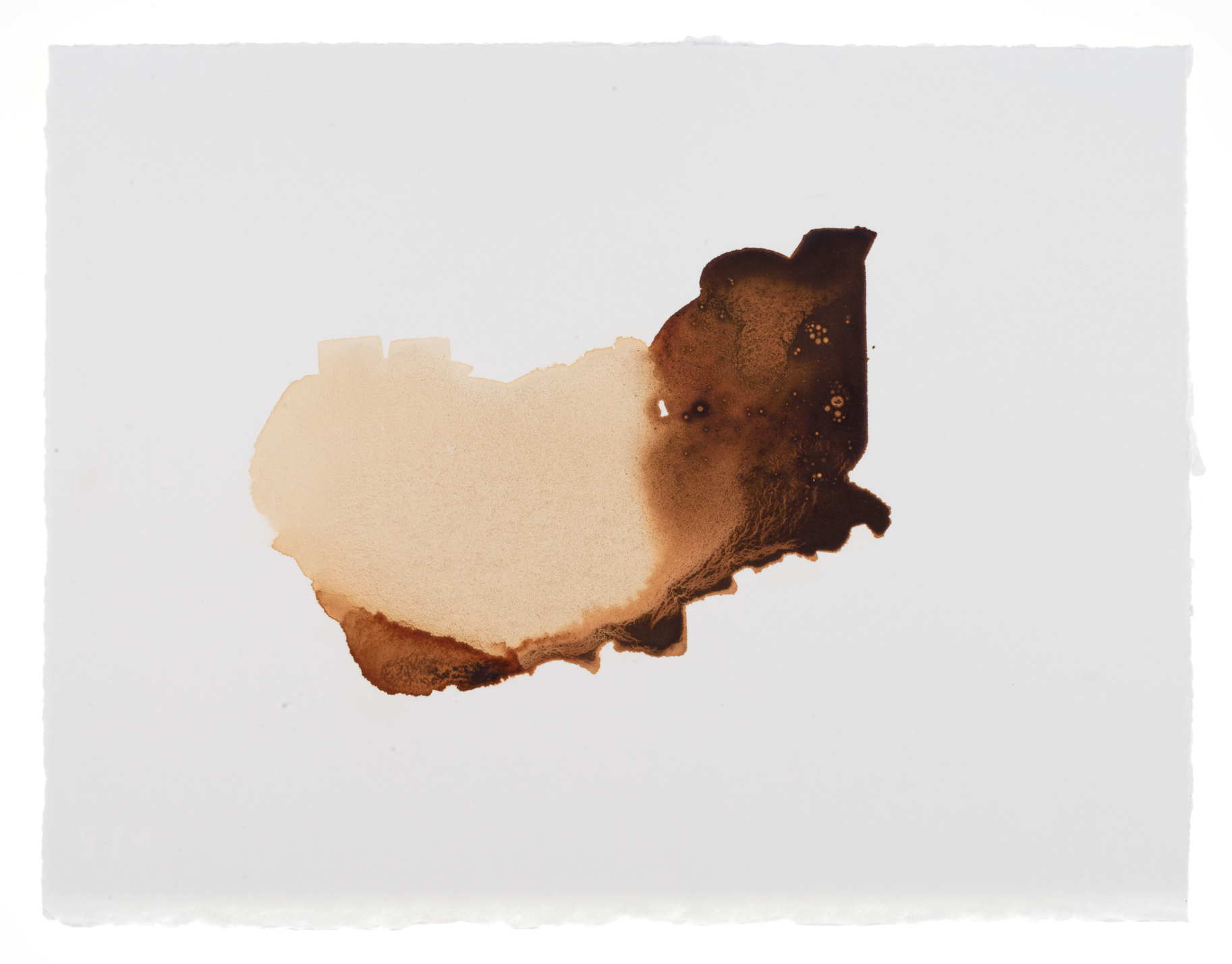 cornelia white swann,  Of the Earth , 2015. Madder root on watercolor paper, 11 1/2 x 15 inches. Documented January 2015.