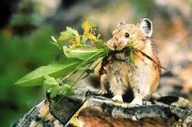 via http://raysweb.net/wildlife/pages/06.html