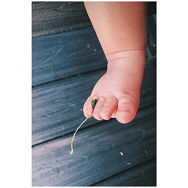 Those tiny toes caught a clover 🍀 #soveryLucki  photo @pvgehvley