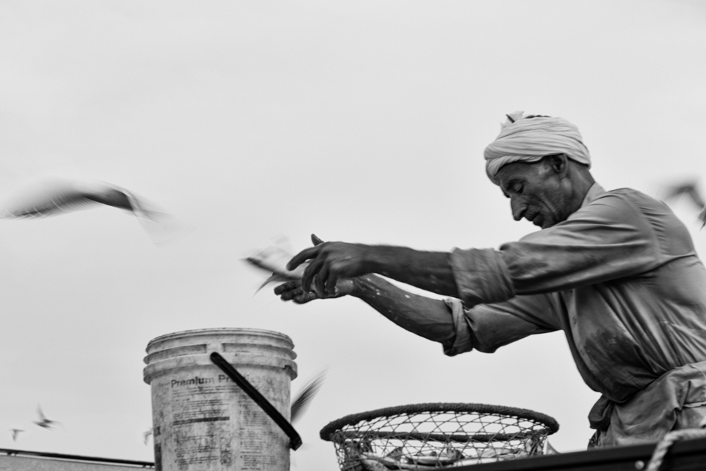 """Catch of the day"" - Dubai, UAE"