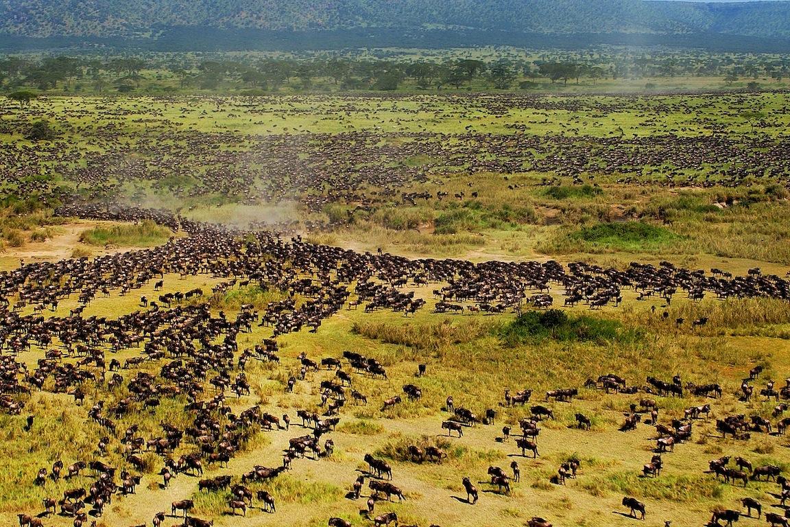 Wildebeest03.jpg