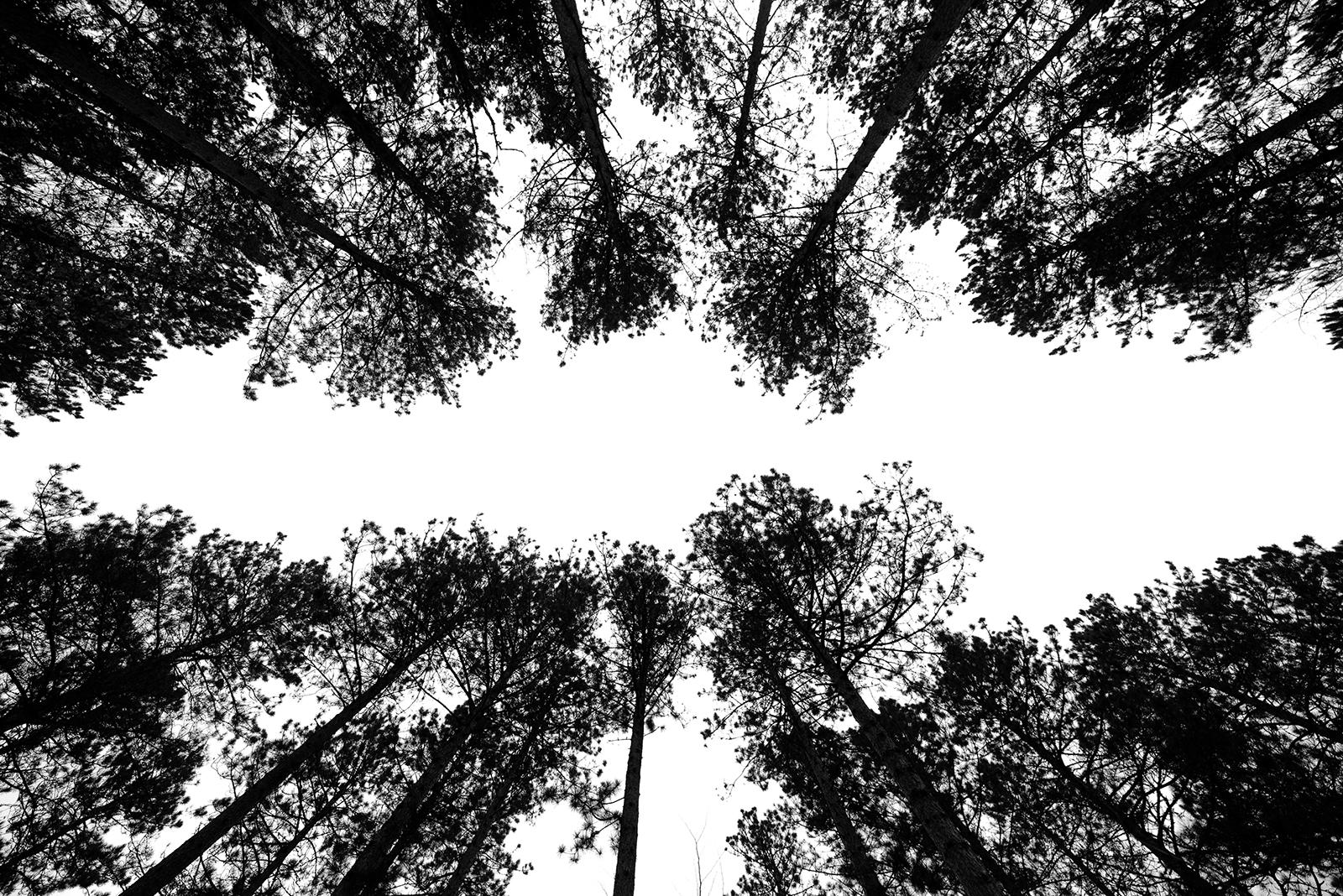 Trees in Upper Peninsula