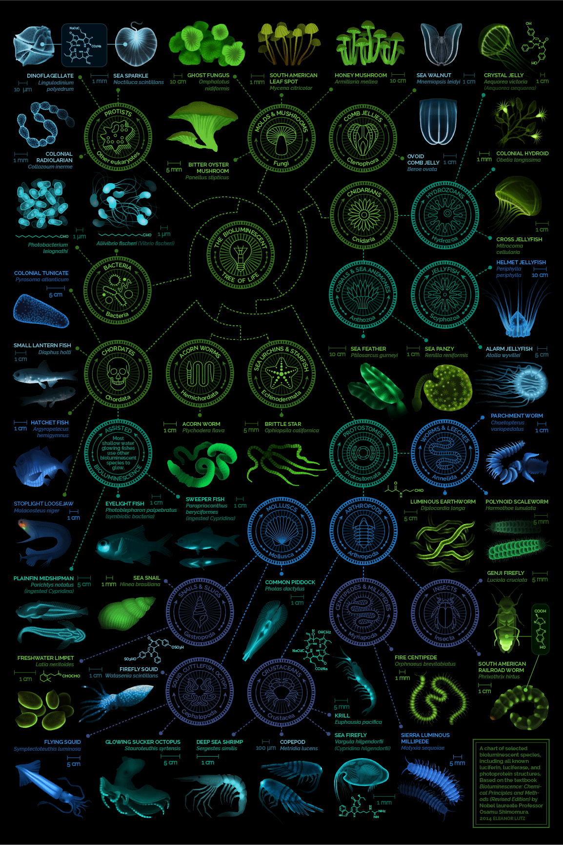 visual-compendium-of-glowing-creatures.png