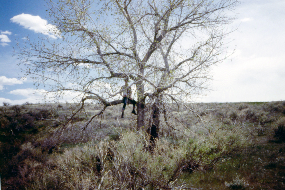Grandma and I in a tree in Colorado, 2014