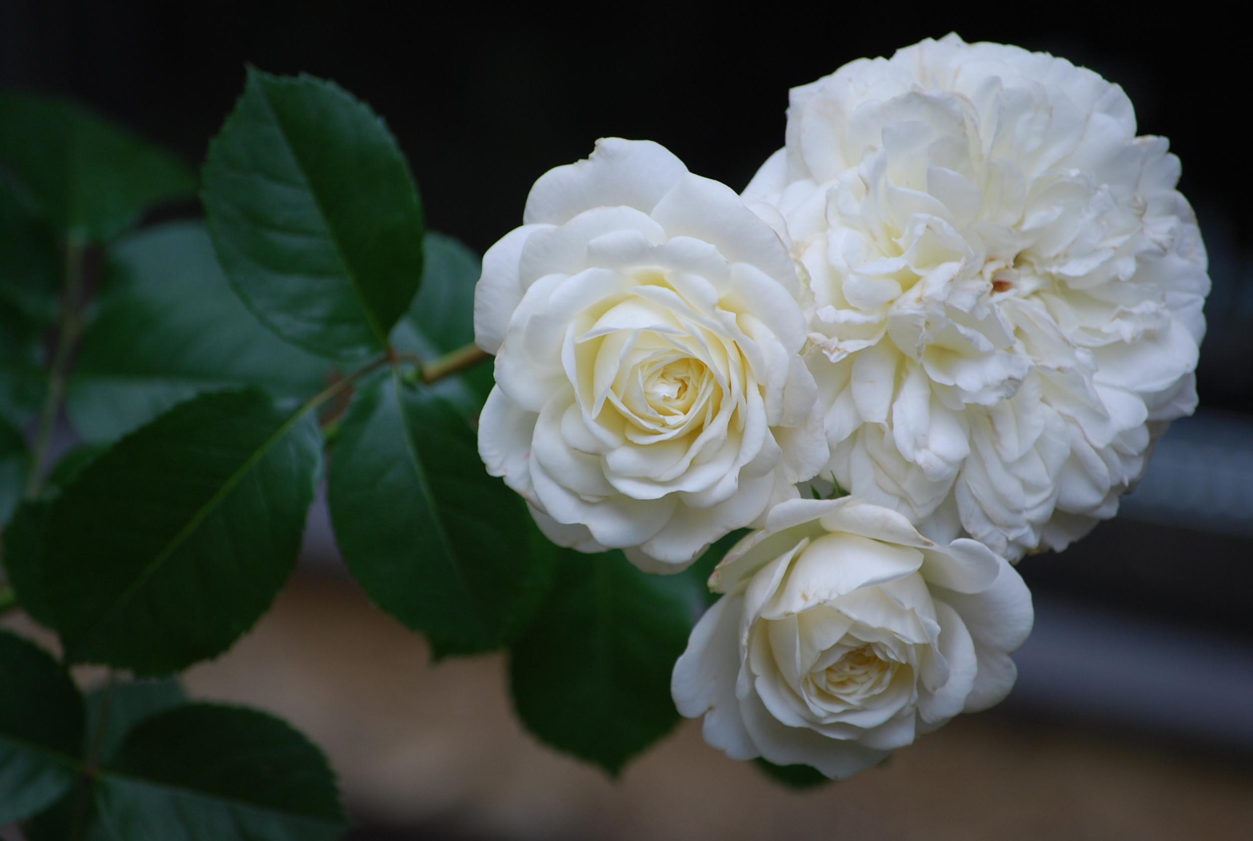 garden june 28,2014 004.JPG
