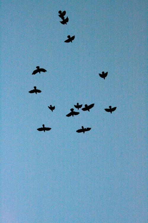 248 Beatriz Lourenço Pássaros.JPG