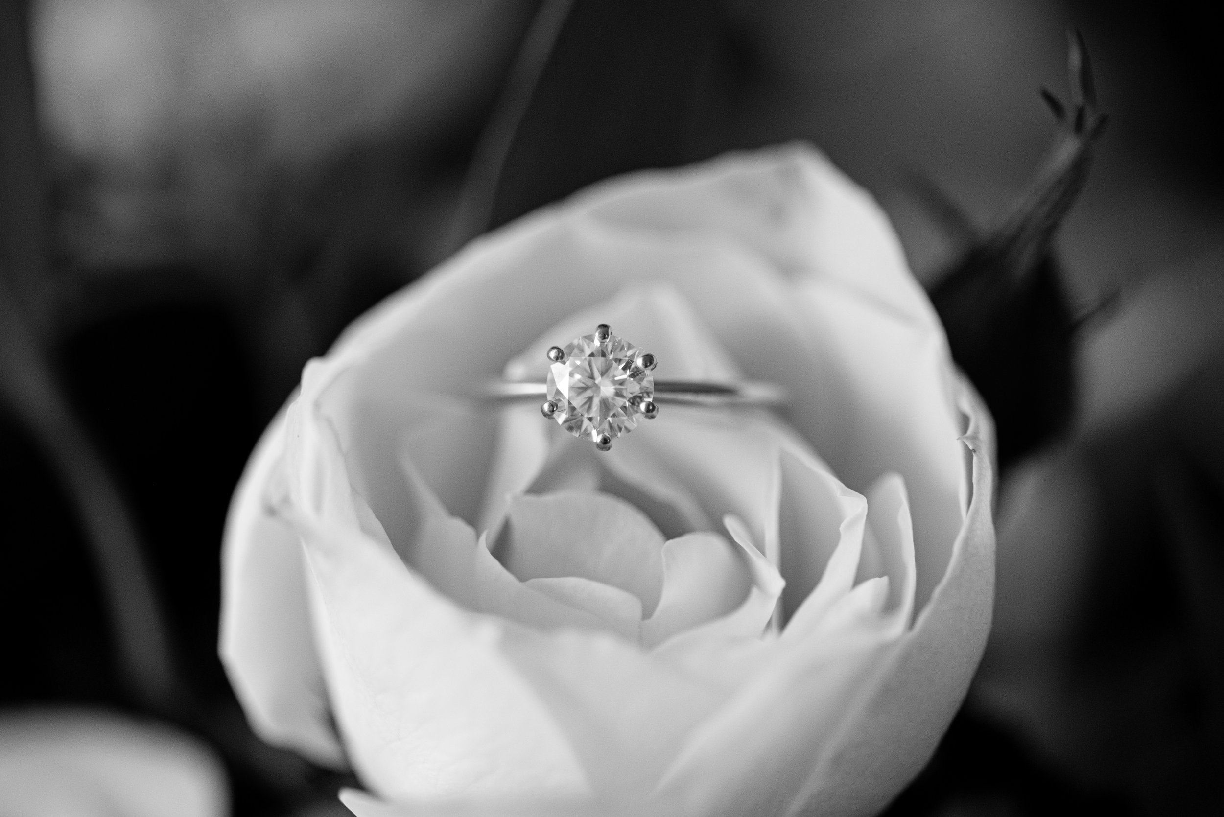 brisbane-gold-coast-sunshine-coast-romantic-wedding-photographer-4.jpg
