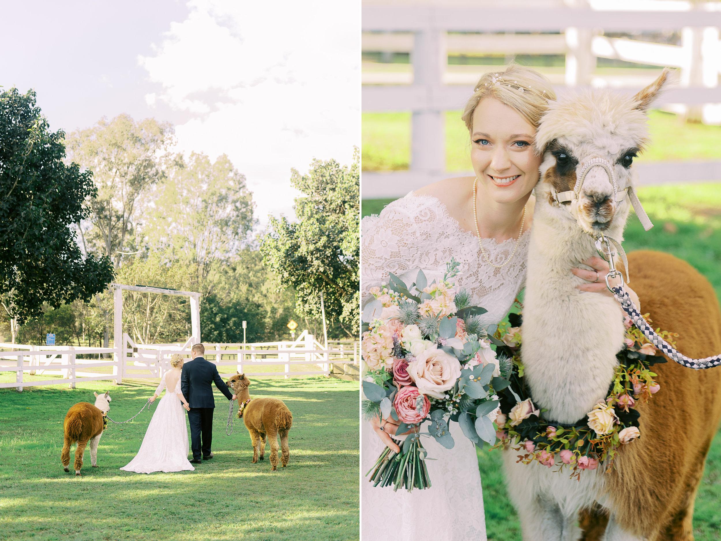 brisbane-city-fine-art-photography-brookfield-hall-wedding-alpacca-2.jpg