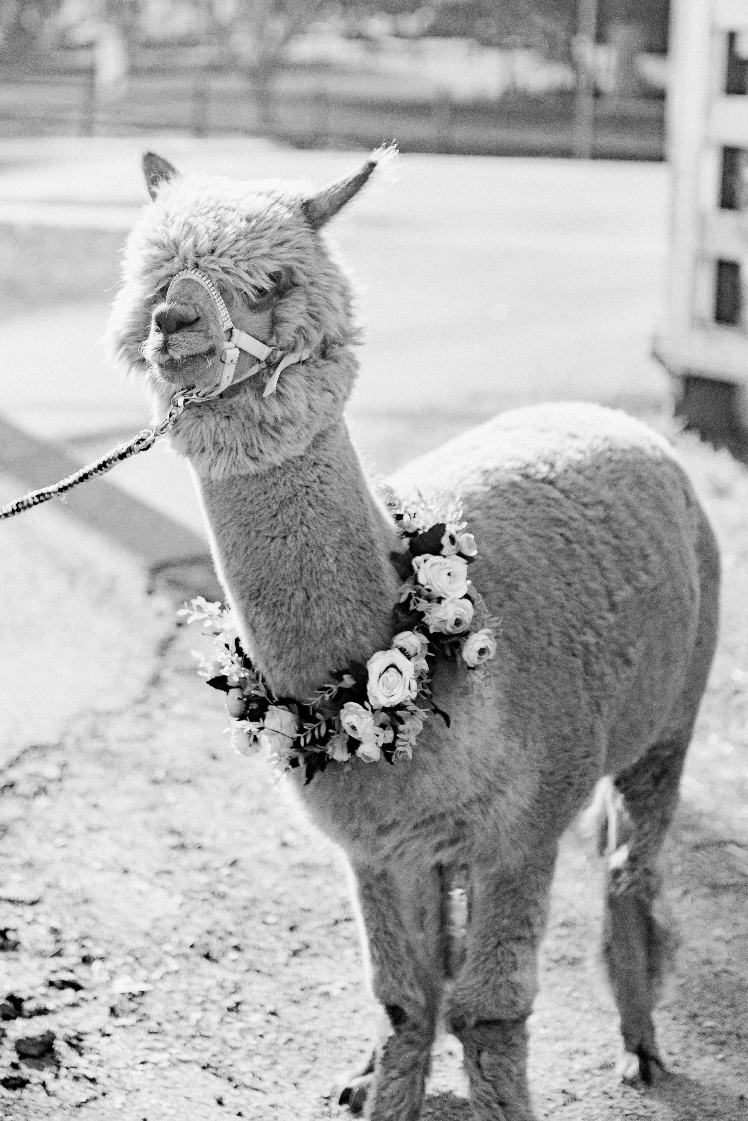 romantic-australian-fine-art-wedding-photographer-8.jpg