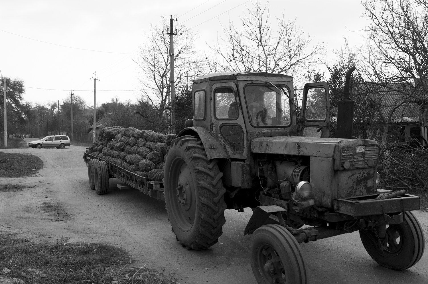 Tractor transporting carrots acrossParcani