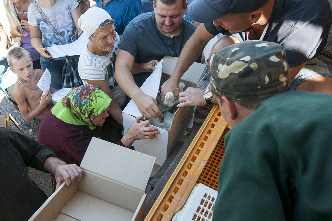 Anton volonteer from the Free People Country NGO, center, helping babushkas collect their chickens in Troicke