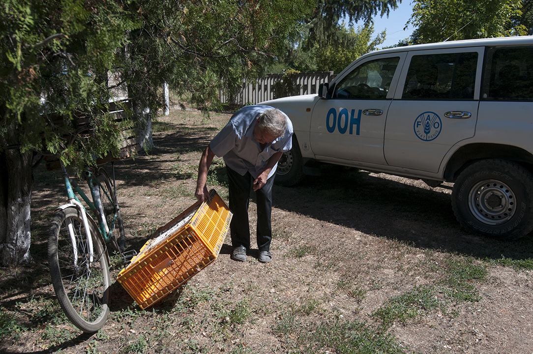 Luhanske's villager checking if he has collected all the chickens from the cage in front of the FAO car.