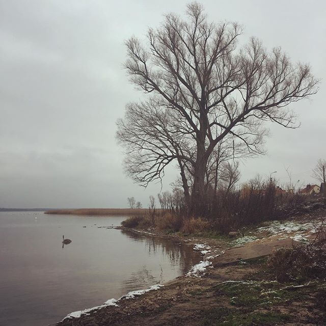 A snowy, swany, little scene along the banks of Poland's biggest lake.