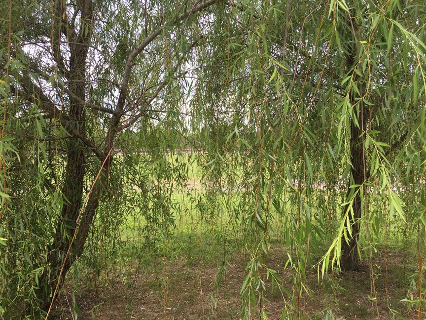 IMG_1265-plantationtrees-2016-lowres.jpg