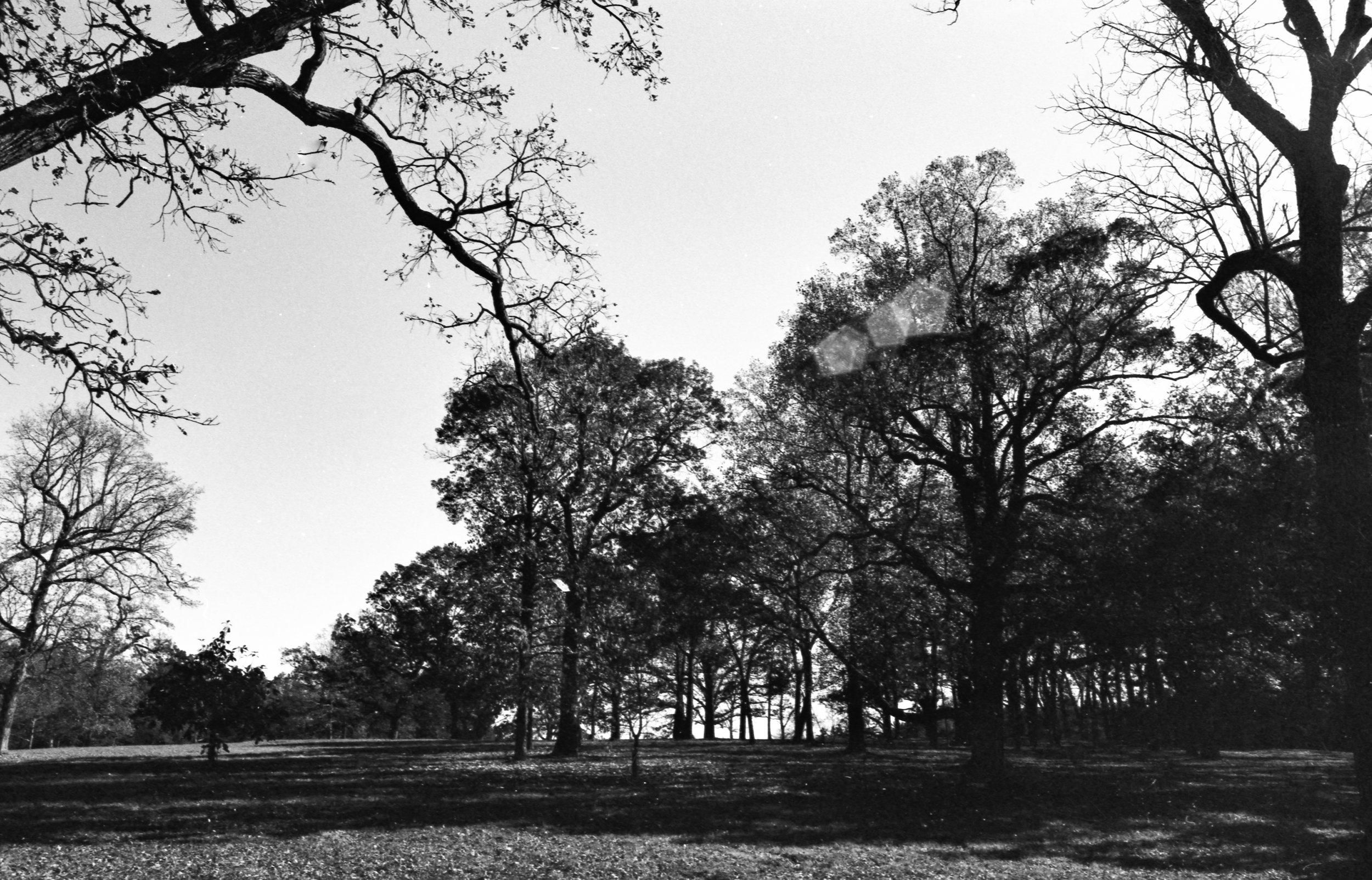 Film Scans-40.jpg