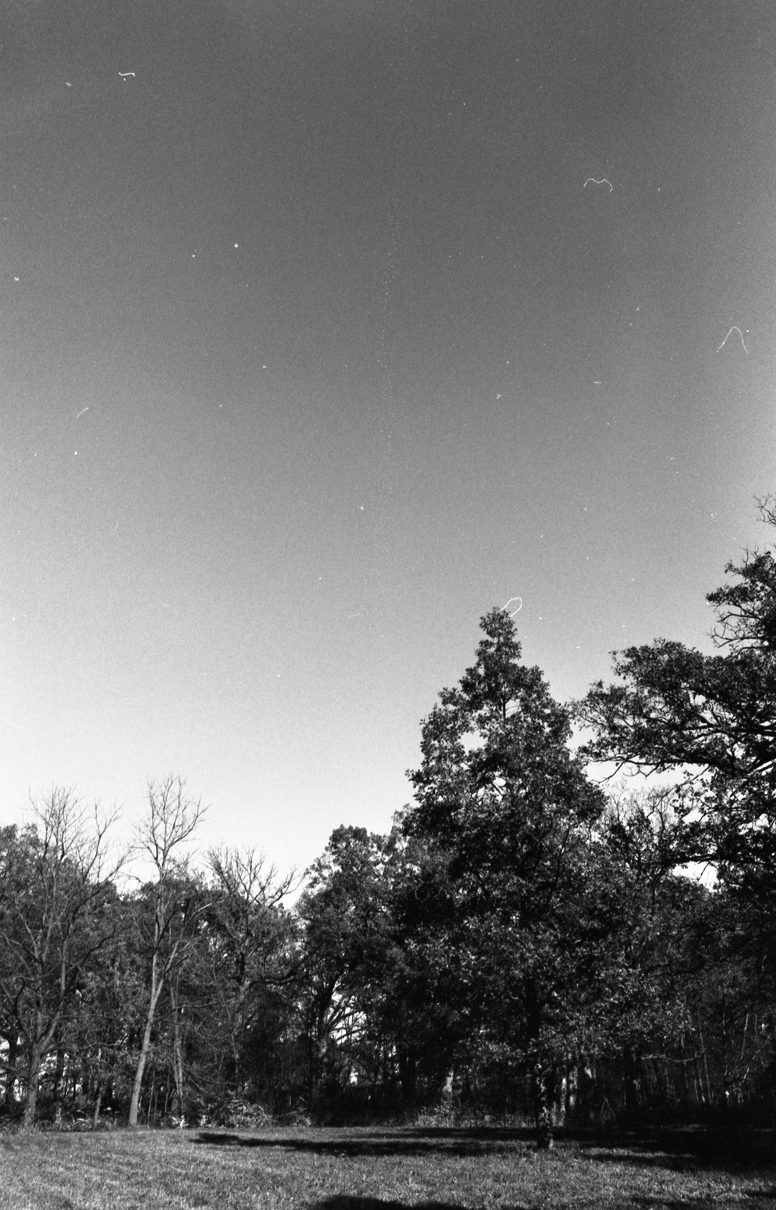 Film Scans-41.jpg