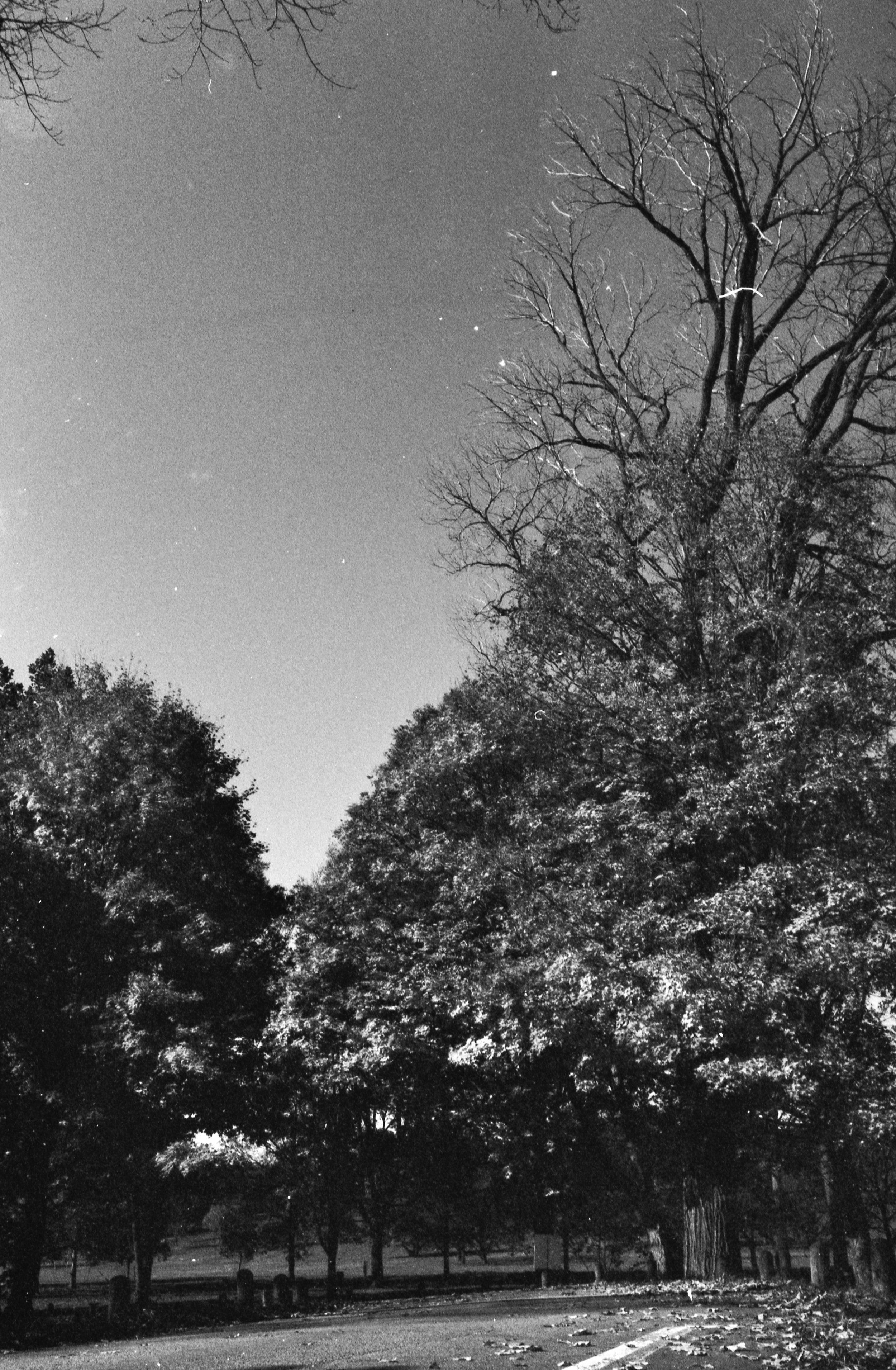 Film Scans-42.jpg