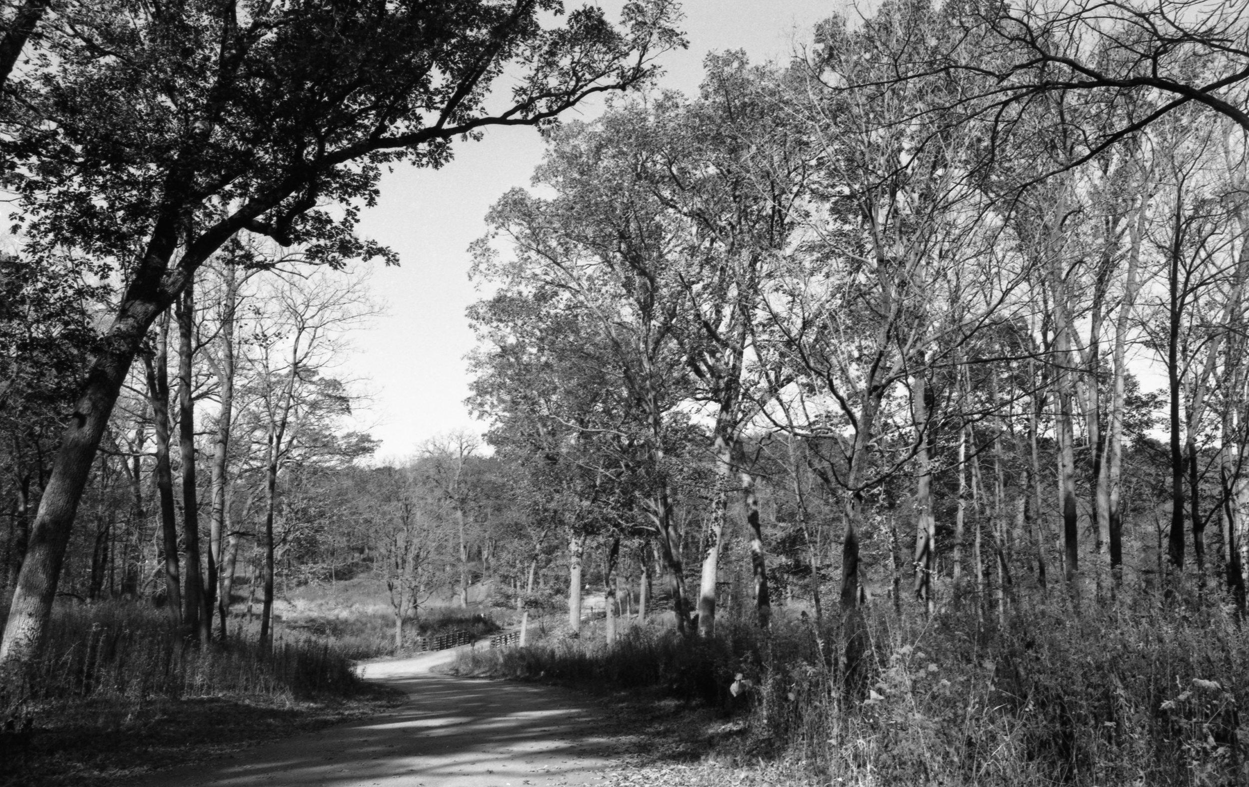 Film Scans-43.jpg