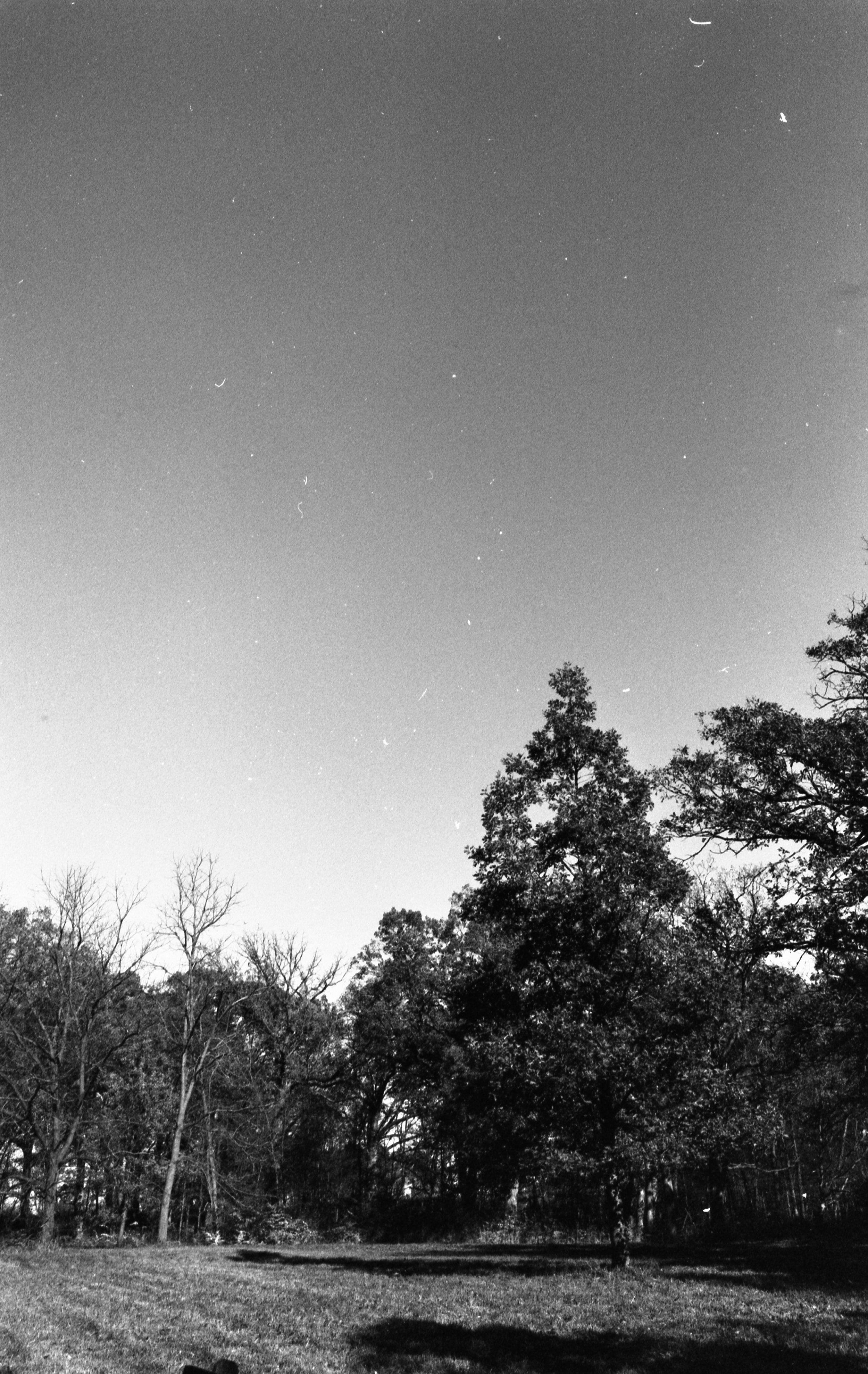Film Scans-44.jpg