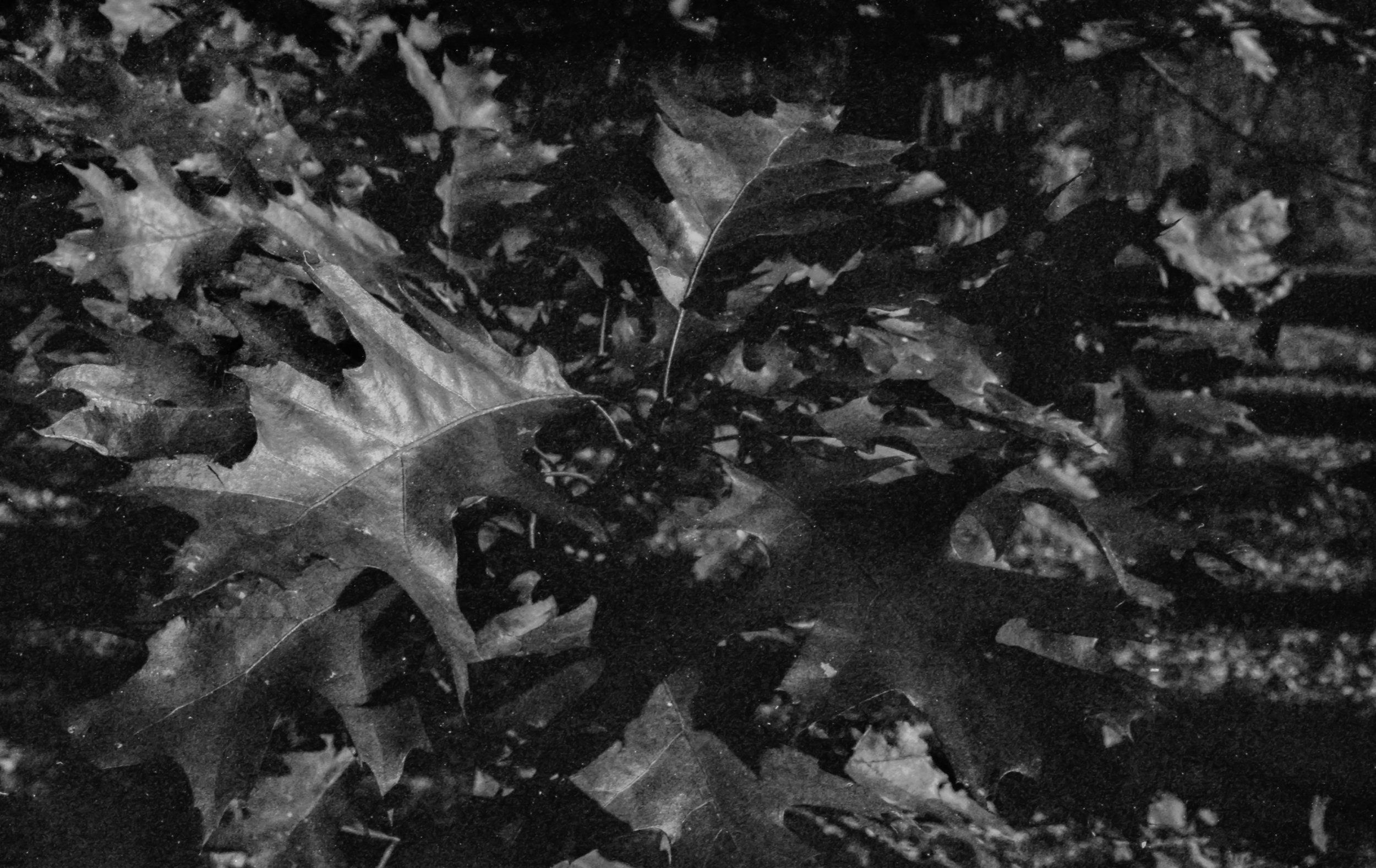 Film Scans-51.jpg