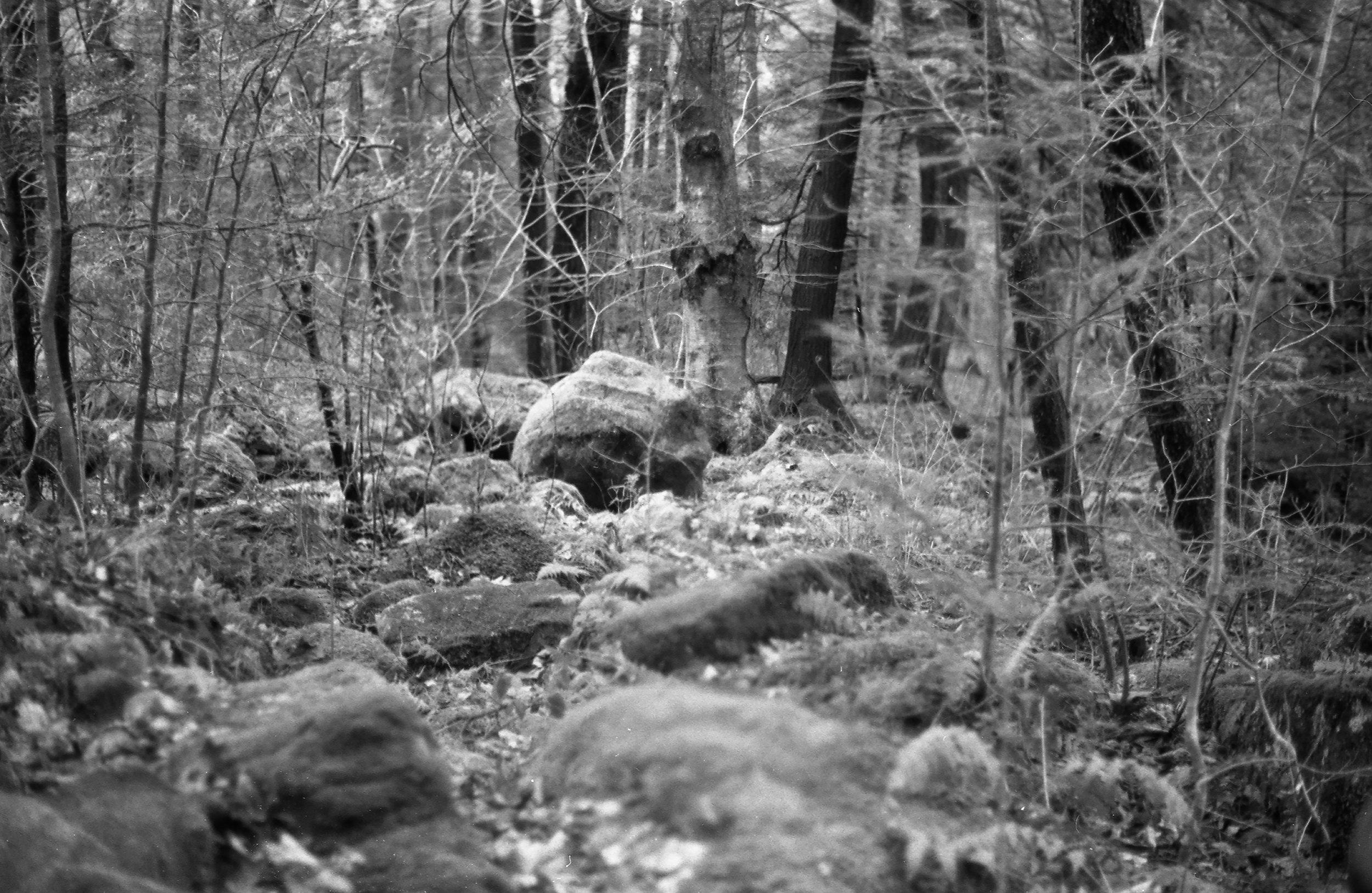 Film Scans-53.jpg