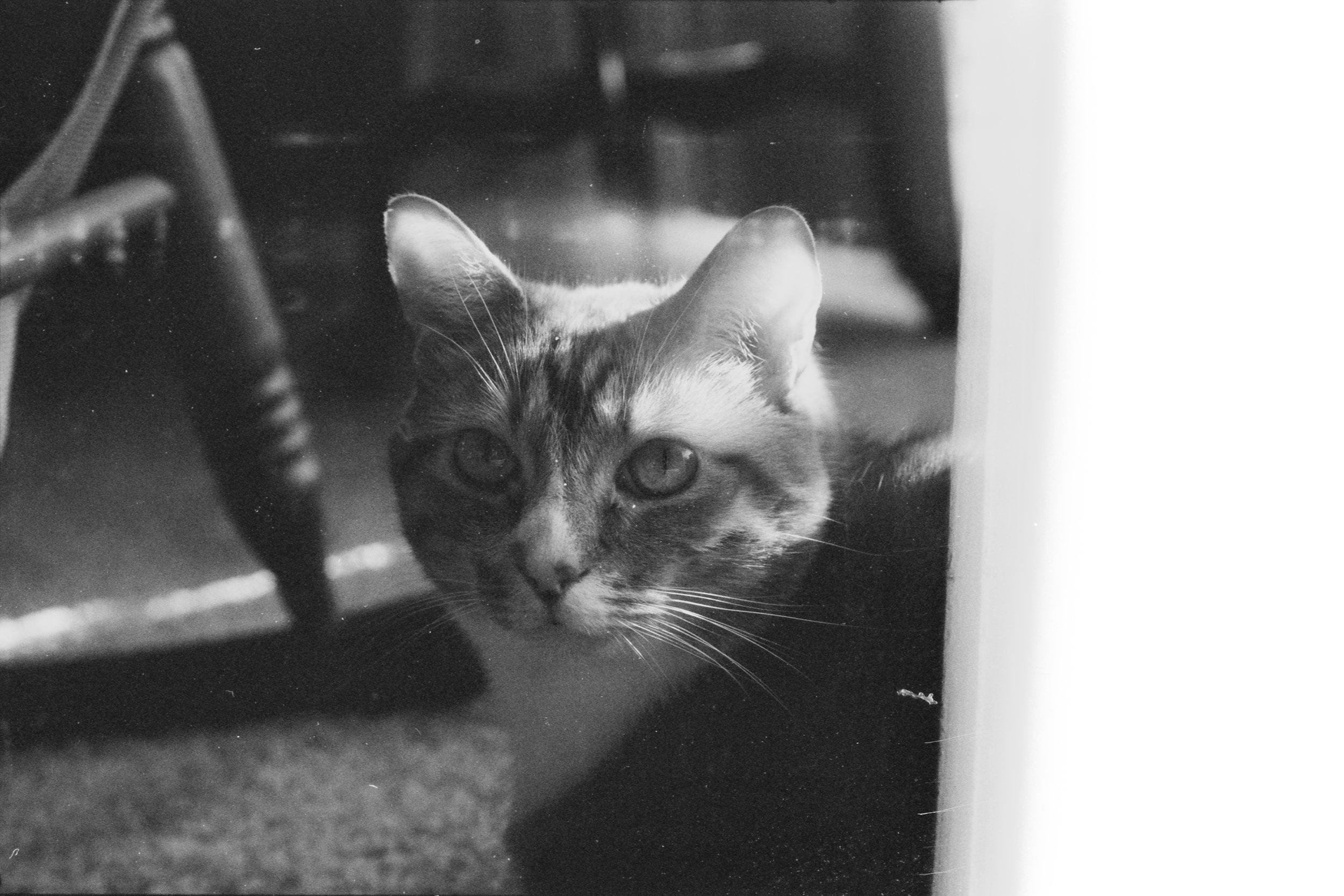 Film Scans-104.jpg