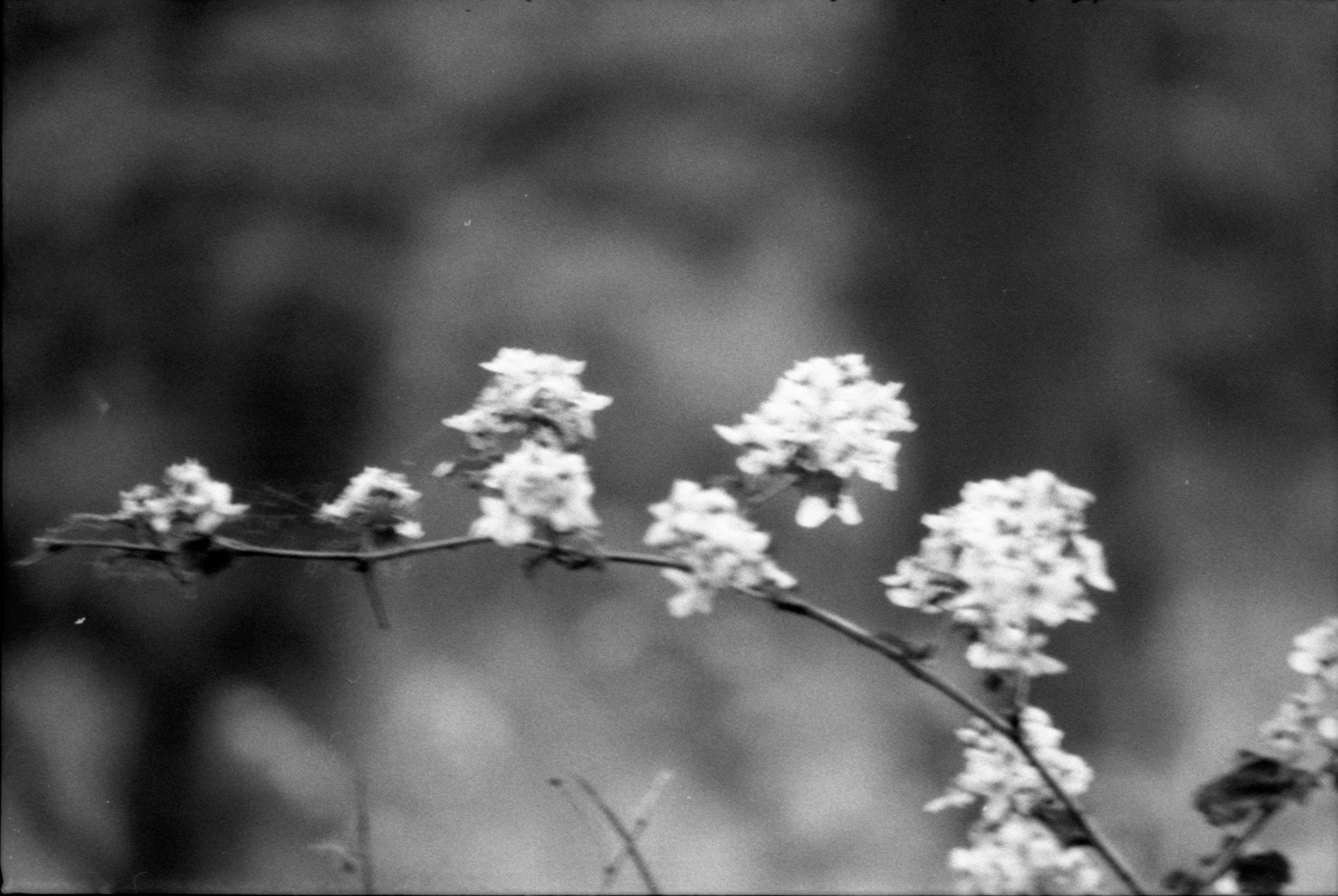 Film Scans-121.jpg