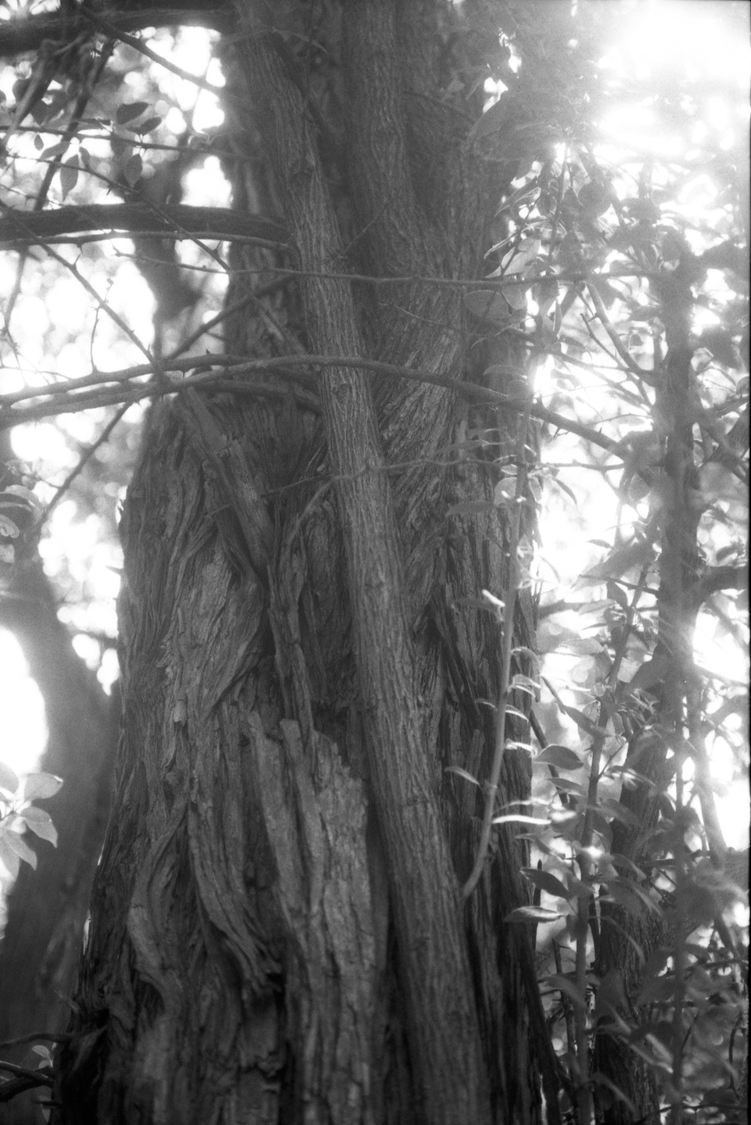 Film Scans-123.jpg