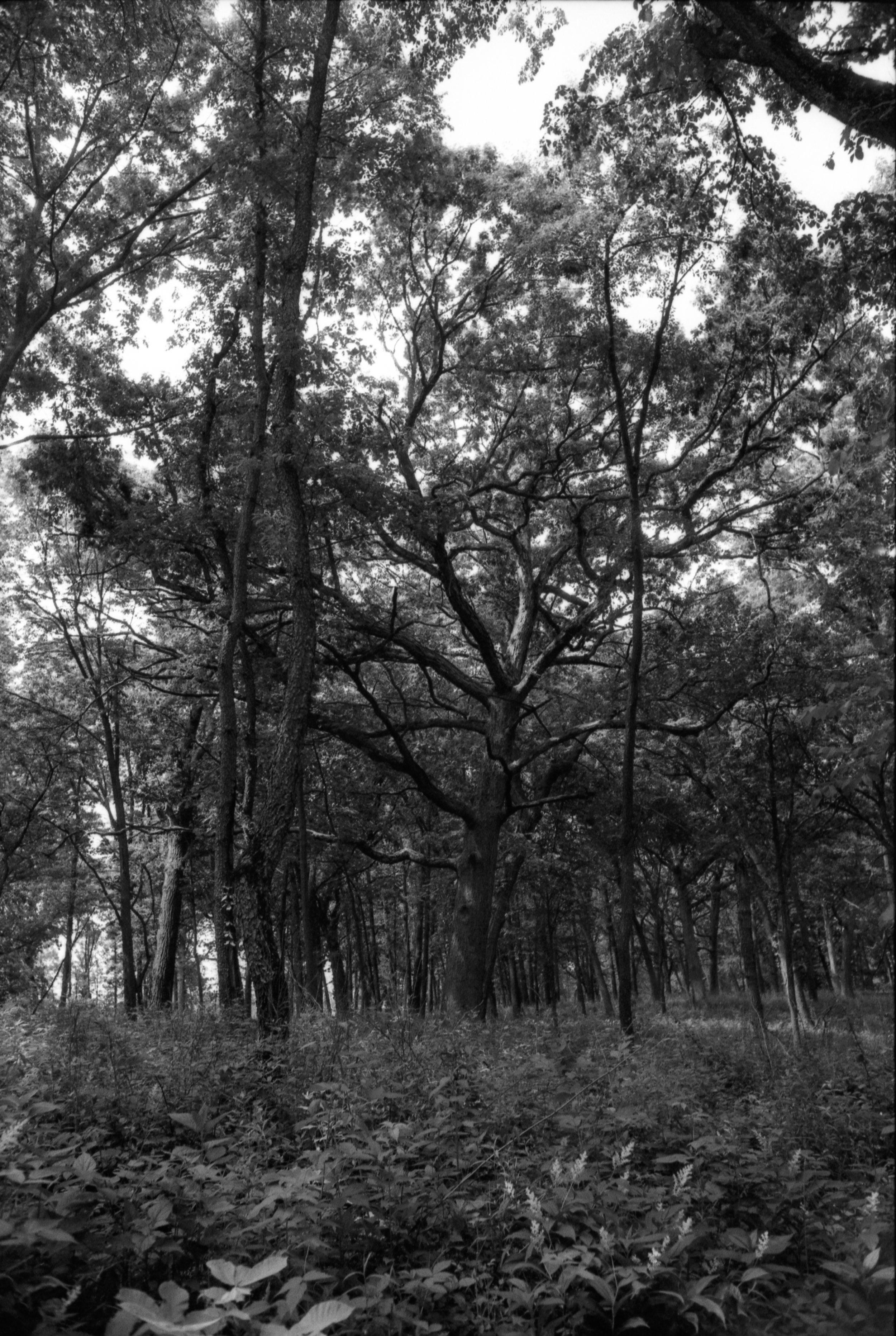 Film Scans-124.jpg