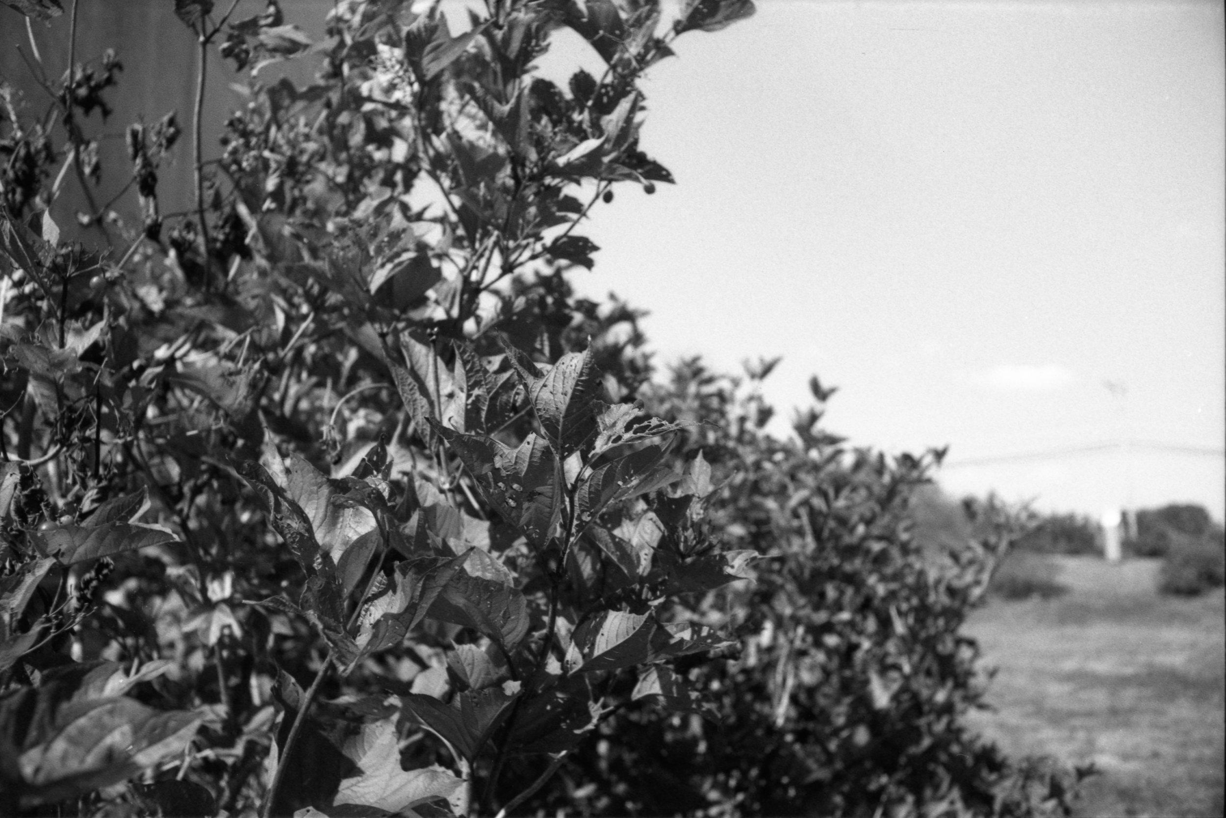 Film Scans-135.jpg