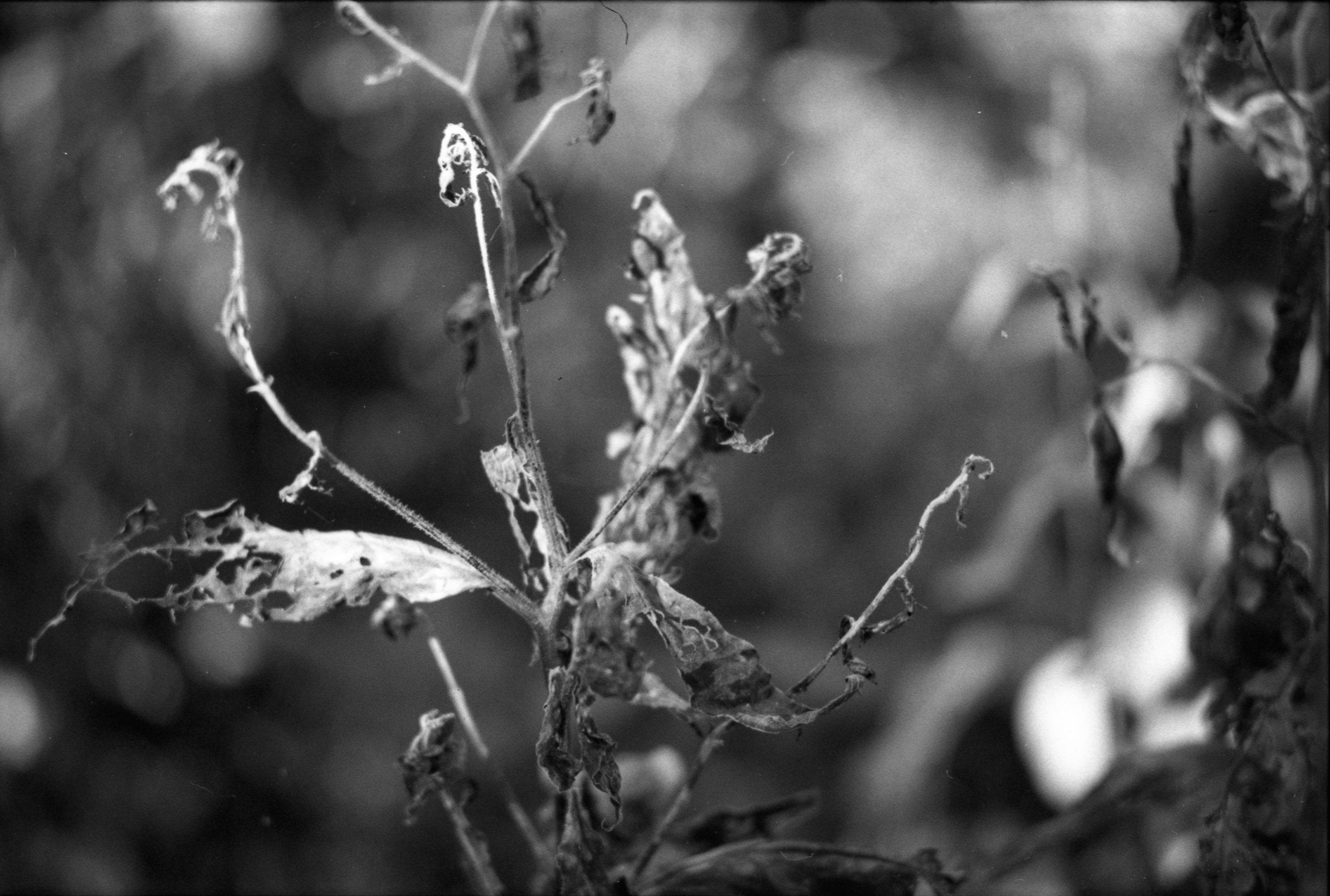 Film Scans-141.jpg