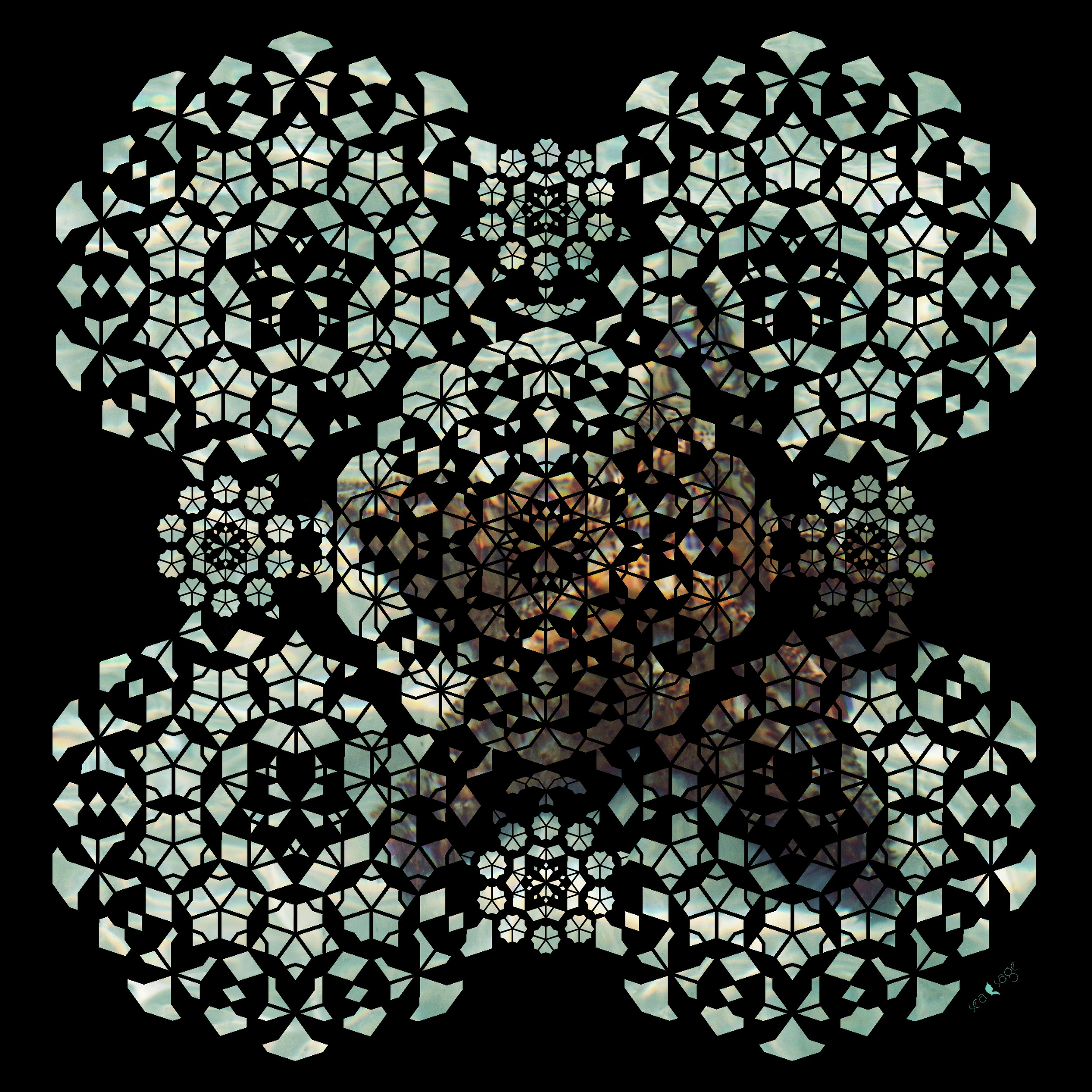 starfishtoprintlowwebsite.jpg
