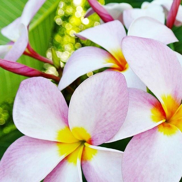 • spring blooms •