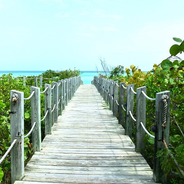 • pathway to paradise •