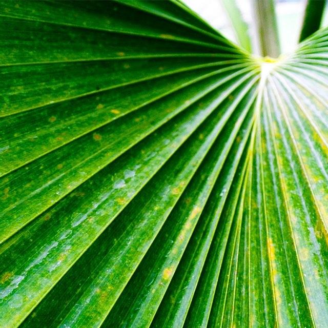• palm patterns •