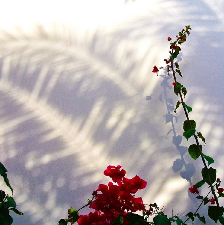 • shadow play •