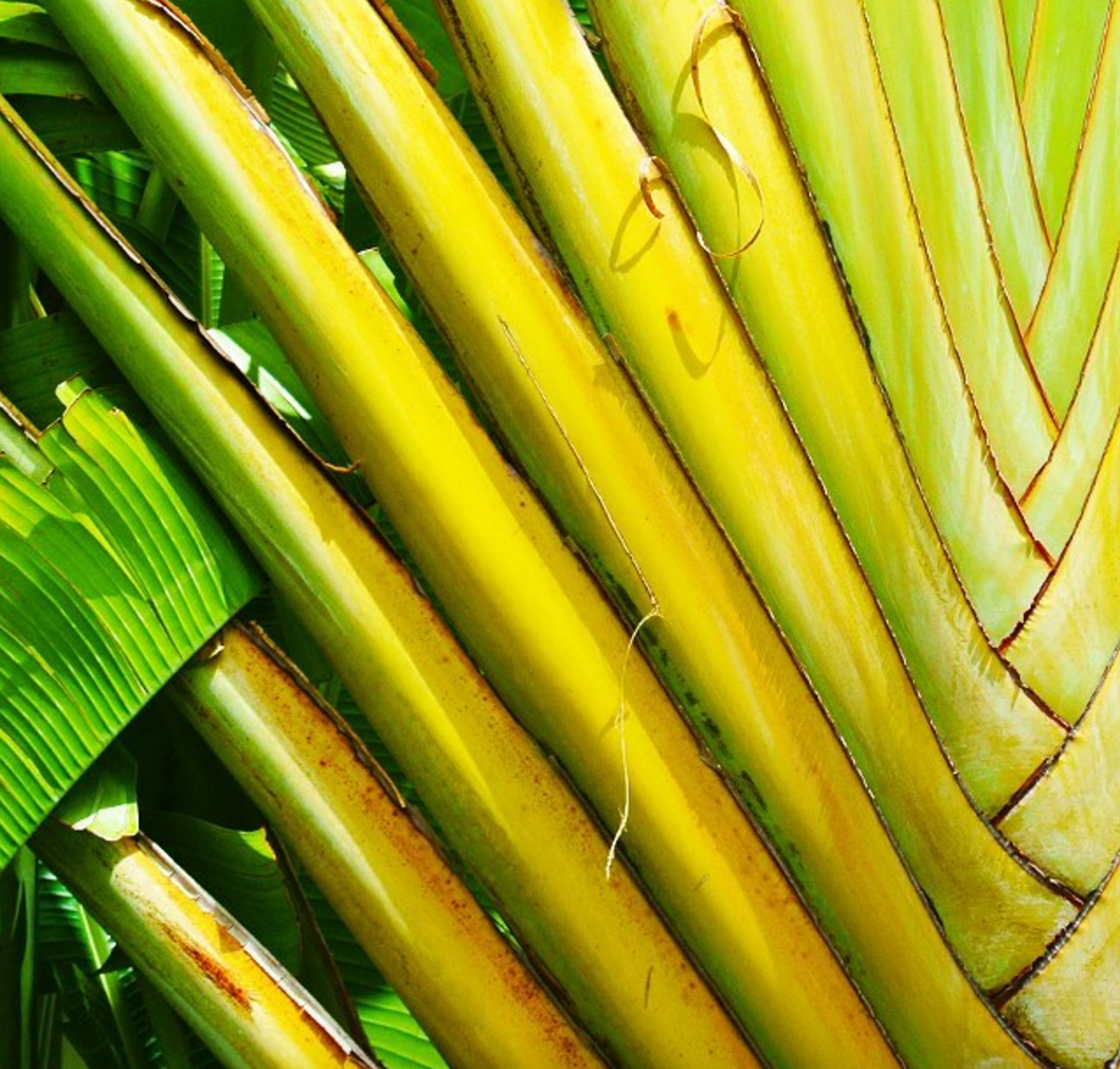 • tropical texture •