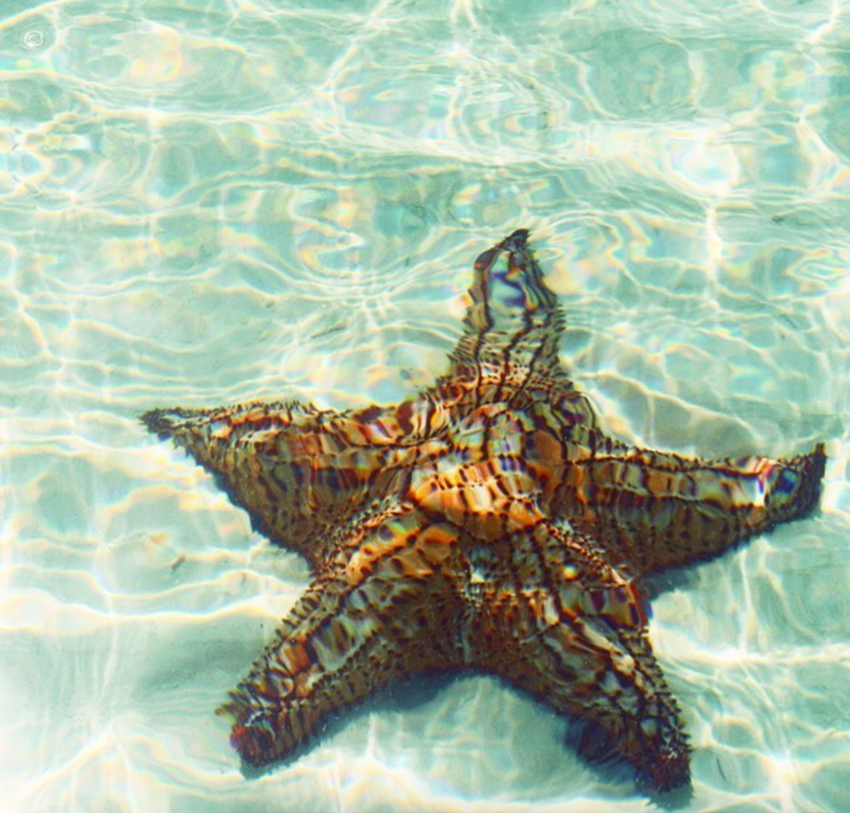 • under the sea - this photo inspired the starfish scarf! •
