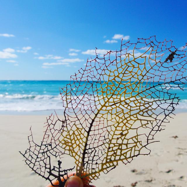 • sea fan at the sea shore •