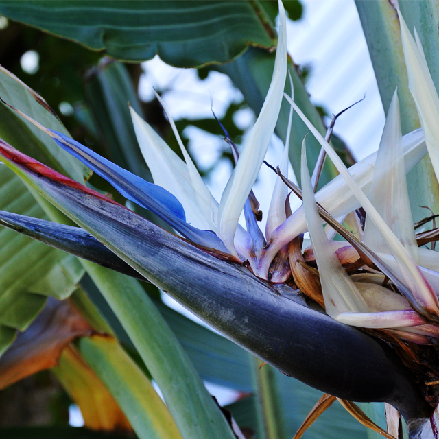 • tropical colours •
