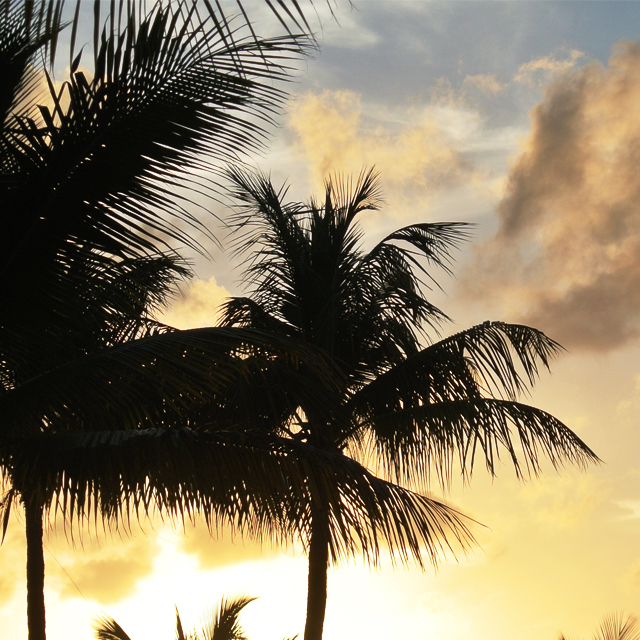 • summer in the tropics •